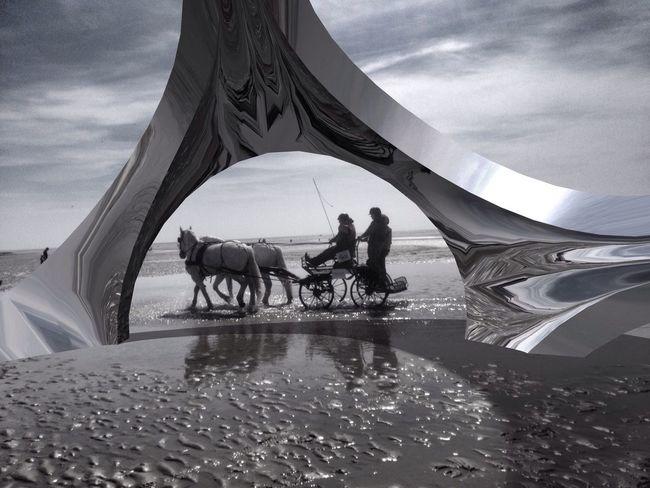 Sea Berck Plage Horse