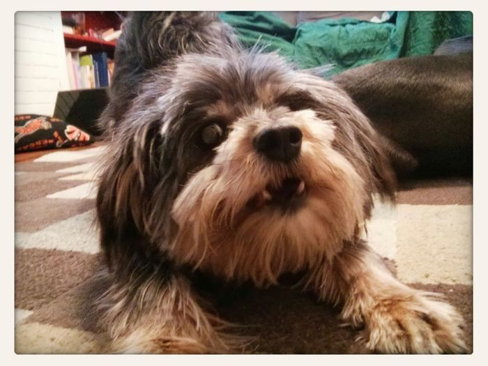 Foster Dogs make great pets. We adopted our first: November. I Love My Dog Doggy Love Adoptee