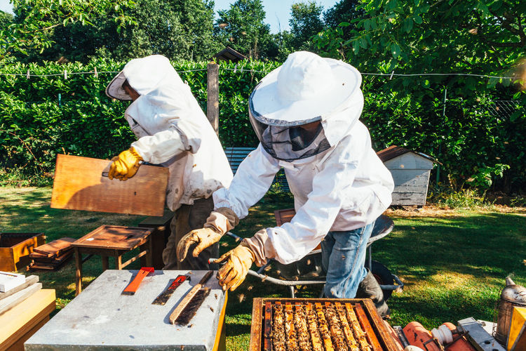 honey production and beeskeeping APIculture Agriculture Bees Honeycomb Apiary Beehive Beekeeper Beekeeping Beeswax Collection Colony Extraction Food Healthy Hive Honey Honey Bee Honey Production Insect Nest Organic Outdoors Pollen Smoker Structure