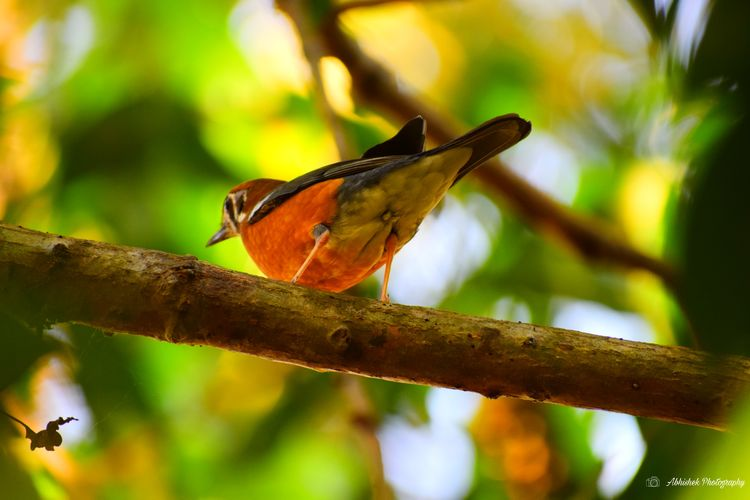 Bird Photography Bird On A Branch Leaves🌿 Orange Color Beauty In Nature Beautiful Clicked On Nikon D3300