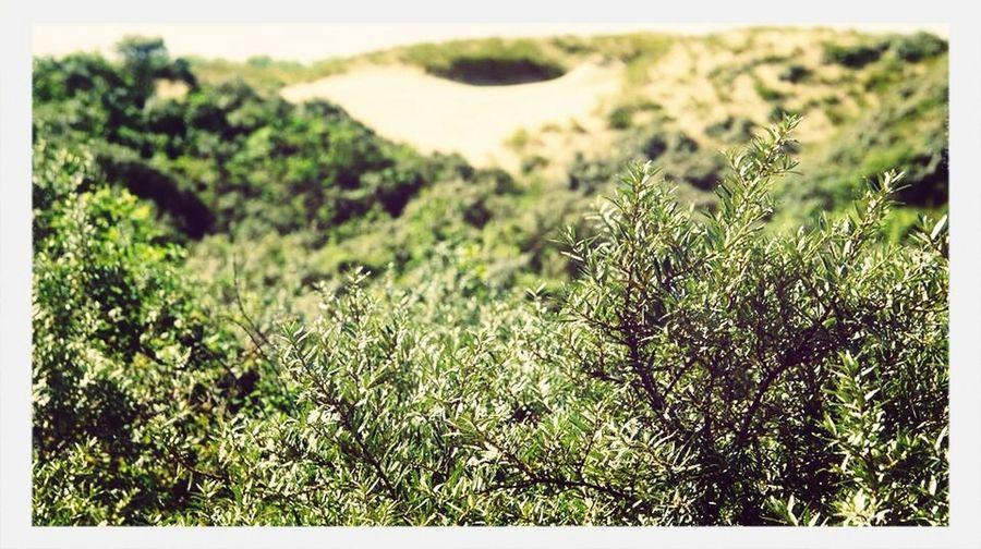Dune La Mer Du Nord Summer💛
