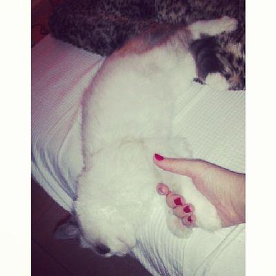 Le gusta dormir abrazado a mí <3 Srenrique Gatolicismo Dormir Sleep cat