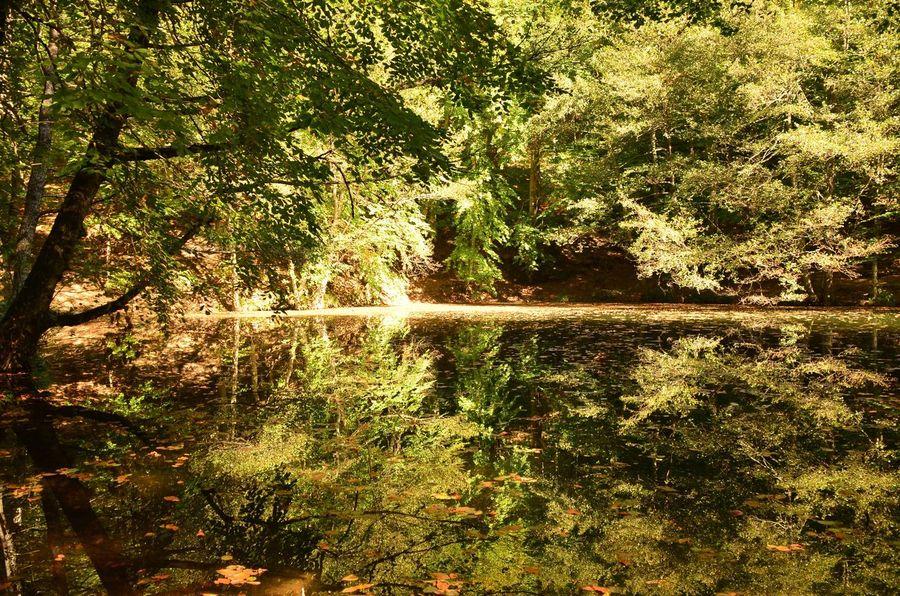 No Filter Yellow Leaves Lagoon Reflection Yedigöllermilliparkı Yellow Leafs Yedigoller Göl