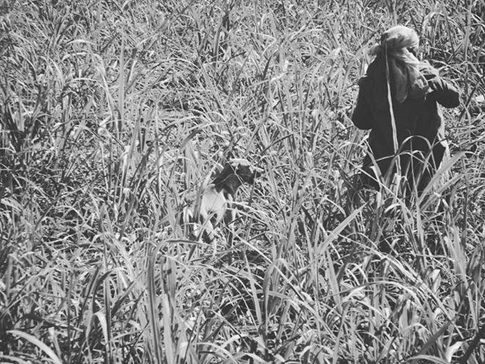 Loyalty...!!✌ . . Wonderlust Ig_troya Ig_captures Worldbestgram Ig_remarkable_pic _ig_photobox Exclusive_shots Exclusive_family World_spotlight Bella_shots Ig_great_pics Pixlepanda_india Pixlepanda_india Phodus Phodus_competition nature_wizard Sweetly_nature Be Brave