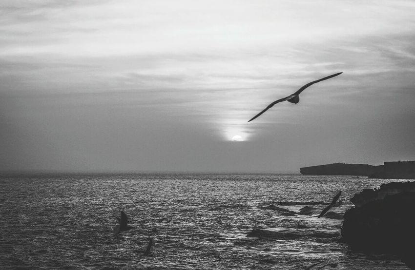 Sunset Seaside Bnw_friday_eyeemchallenge Black And White Landscape Bnw_sunset Monochrome Golden Hour