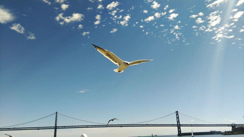 Seagull Birds Sanfrancisco Oakland Bay Bridge Androidography NatureEyeem Collection Fine Art Photography 2016 EyeEm Awards The Eyeem Collection At Getty Images Getty Images Pet Portraits Eyeem Sold Summer In The City
