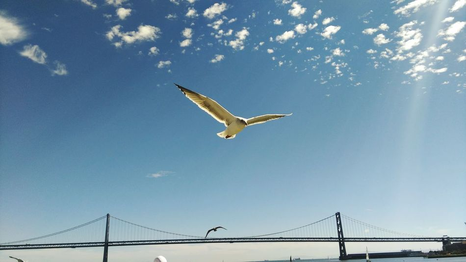 Seagull Birds Sanfrancisco Oakland Bay Bridge Androidography NatureEyeem Collection Fine Art Photography 2016 EyeEm Awards The Eyeem Collection At Getty Images Getty Images Pet Portraits Eyeem Sold