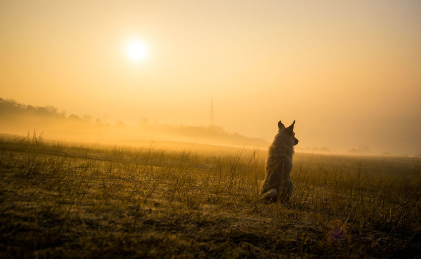 View of dog on field during sunset