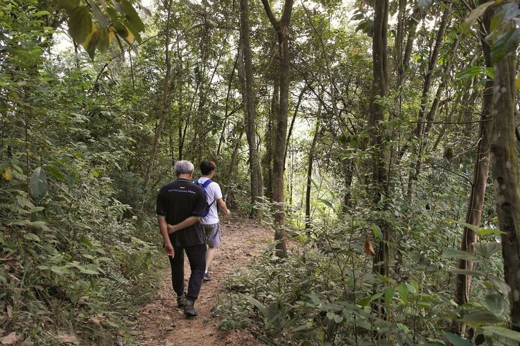 Rear View Walking Men Real People Forest Tree Nature Hiking Day Leisure Activity Standing Two People Outdoors Lifestyles People Beauty In Nature Adult Men Jungle Trekking