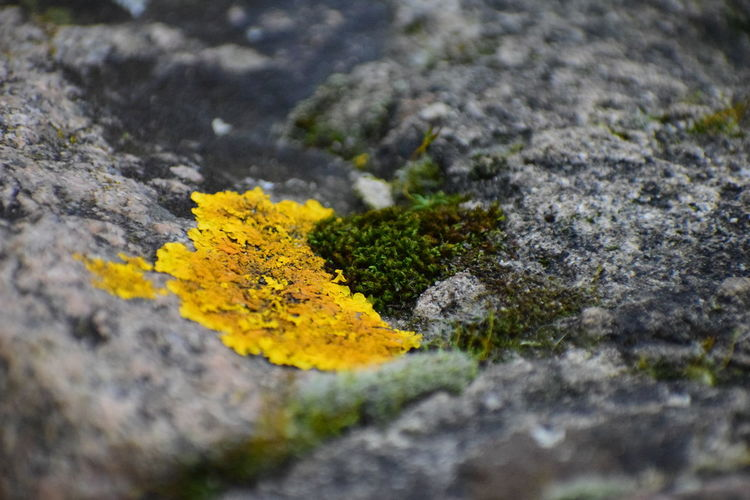 yellow moss on