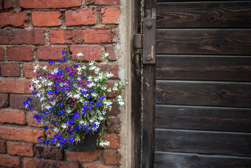 Strömforsin Ruukki Brick Wall Flower Decoration Herb Plant Red Brick Wall Rural Swedish Bunch Of Flowers Country Life Countryside Door Finnish  Flowers Nordic Outdoors Red Barn Red Brick Summer Village Life Wooden Door