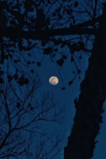 Moon Night Full Moon Tree Nature Branch Beauty In Nature Low Angle View Astronomy Planetary Moon Bare Tree Sky Crescent Outdoors No People Half Moon Scenics Moonlight