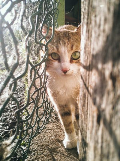 Cute Light Shadow Animal Themes Pet Fence Wood Kitten Light And Shadow Wood - Material Green Eyes Beautiful EyeEm Selects Portrait Pets Feline Domestic Cat Looking At Camera Close-up Young Animal