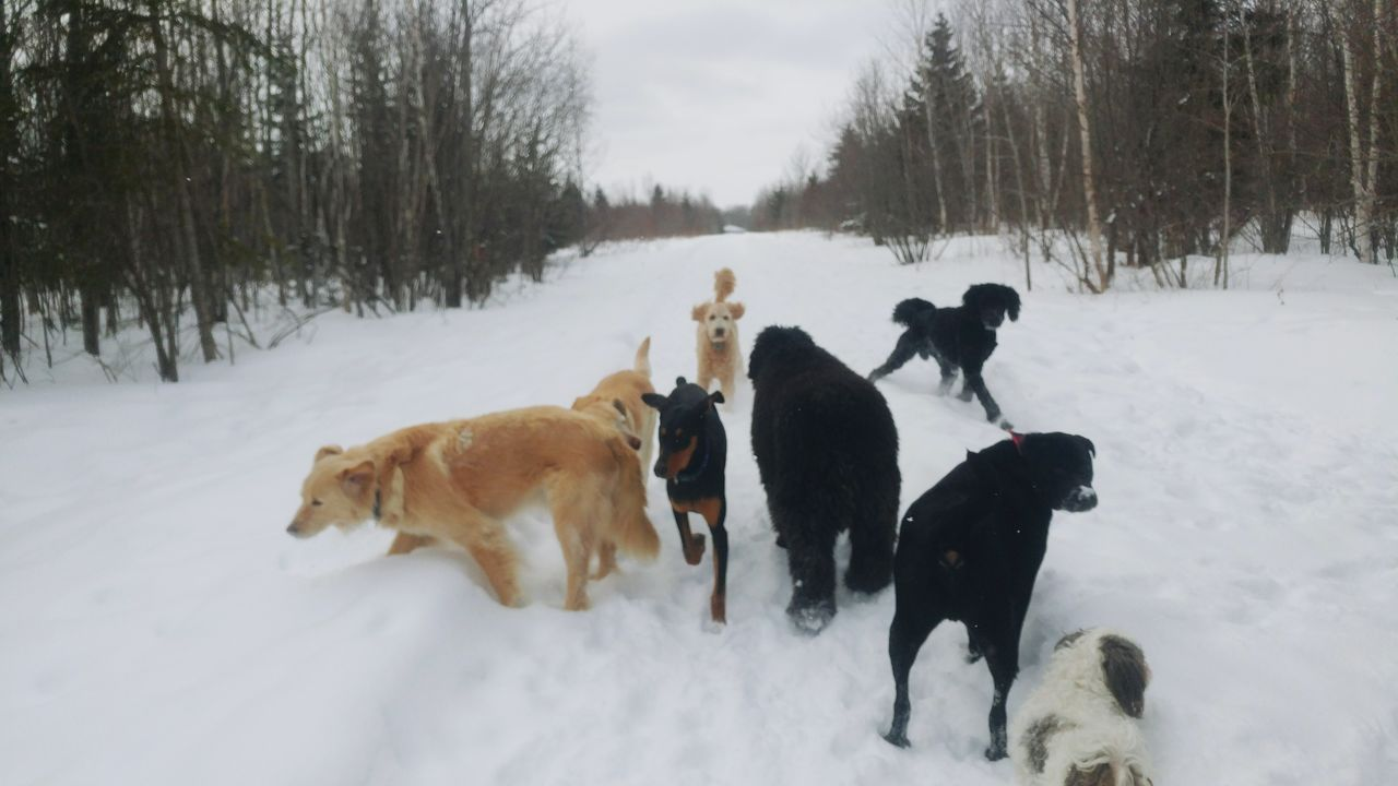 snow, winter, cold temperature, dog, domestic animals, animal themes, weather, nature, field, mammal, white color, pets, outdoors, togetherness, day, no people, beauty in nature, tree, sky