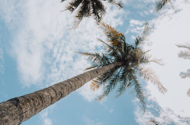 coconut trees against a blue sky background Sky Tree Low Angle View Palm Tree Plant Cloud - Sky Tropical Climate Trunk Tall - High Beauty In Nature Coconut Palm Tree Scenics - Nature Tropical Tree Tranquil Scene Tranquility Palm Leaf Outdoors Kelapa Backgrounds Blue Directly Below Nature Growth
