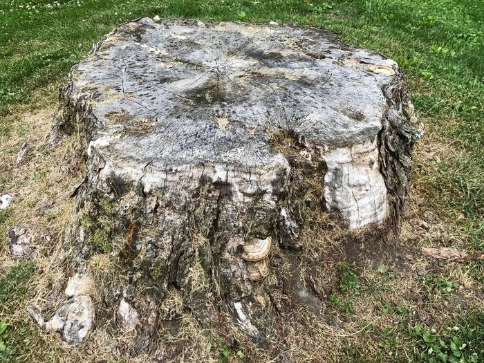 Stump High Angle View Day Field Grass No People Outdoors Nature Tree Beauty In Nature Close-up