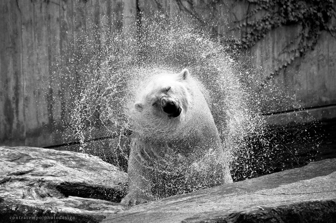 water, motion, splashing, day, outdoors, one animal, no people, sea, nature, animal themes, wave, power in nature, crash, mammal, force, close-up