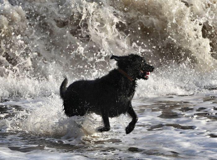 Wet dog splashing water at sea