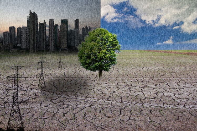 Conceptual image of green tree standing on Drought Landscape Architecture Plant Environment Cloud - Sky Scenics - Nature Nature Sky Built Structure Day Arid Climate Climate Cracked Land Dry No People Building Building Exterior City Tree Outdoors