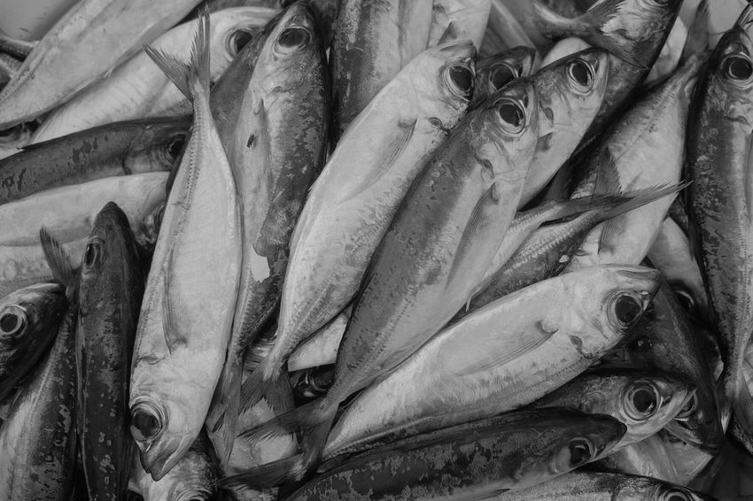 Fish of the day Cabo Verde Seafood Fish Vertebrate Raw Food Freshness Food And Drink Food For Sale No People Market Fish Market Close-up Still Life