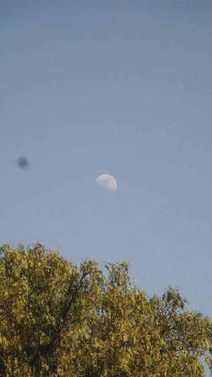 Luna a medio dia :3 (perdon por la mamcha pero el lente estaba sucio /u\)Luna LunaaMedioDia