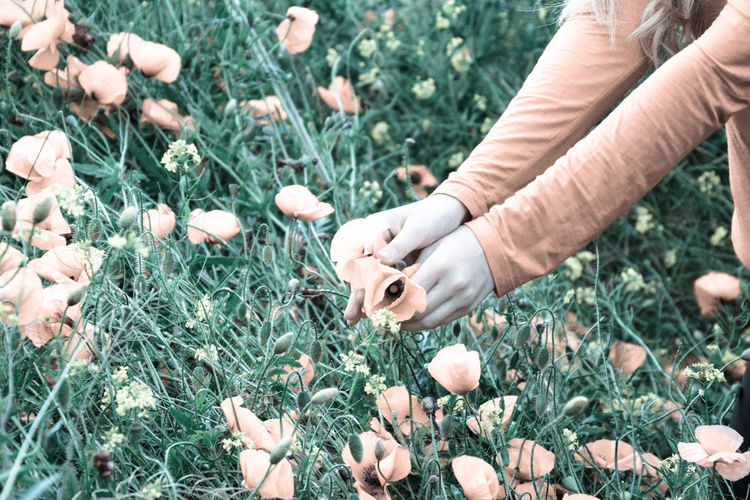 Close-up of hands holding flowers on field