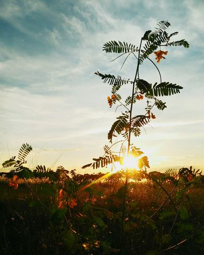 Nature Beauty In Nature Sky No People Outdoors Cloud - Sky Sunset Golden Lighting Autumn Scene Growth