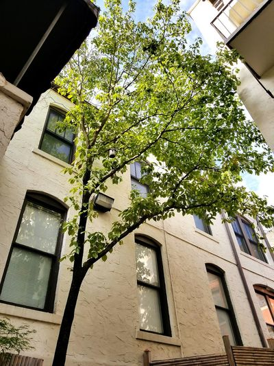 EyeEmNewHere EyeEm Selects Architecture Building Exterior Low Angle View Window Day Tree Outdoors Nature