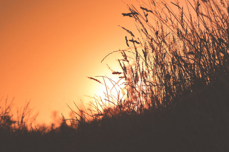Beauty In Nature Clear Sky Environment Field Growth Idyllic Land Landscape Nature No People Non-urban Scene Orange Color Outdoors Plant Romantic Sky Scenics - Nature Silhouette Sky Stalk Sunset Timothy Grass Tranquil Scene Tranquility