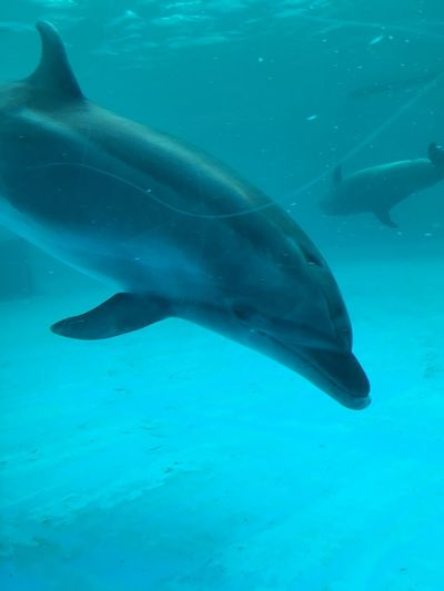 Dolphins Animal