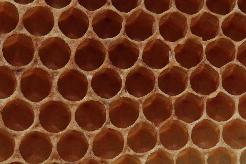 Beekeeping Apis Mellfica HoneyBee Honeycomb Apiary Beauty In Nature Beehive Beekeeing Entomology