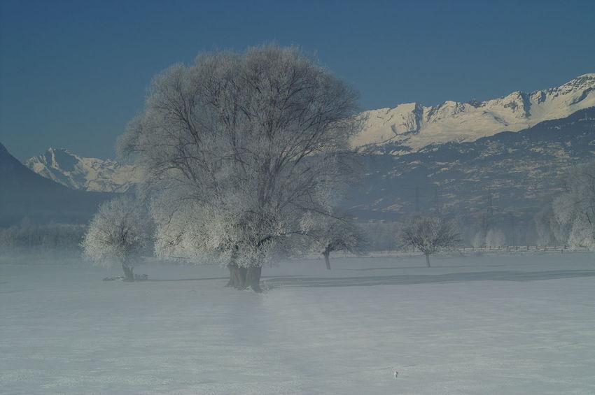 Schweiz Switzerland Wallis Leuk Schweizer Alpen Berge Mountains Blue Sky Blauer Himmel Foggy Morning Nebel Wintertime Winter Wonderland Winter Trees Schnee Snow Cold Cold Temperature Ice Age