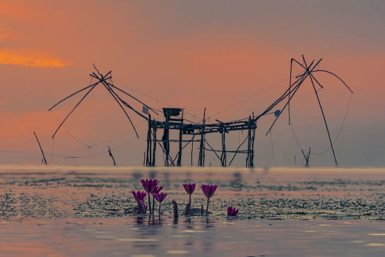 View of flowering plants against sea during sunset