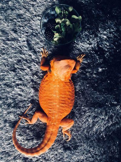 Orange Color No