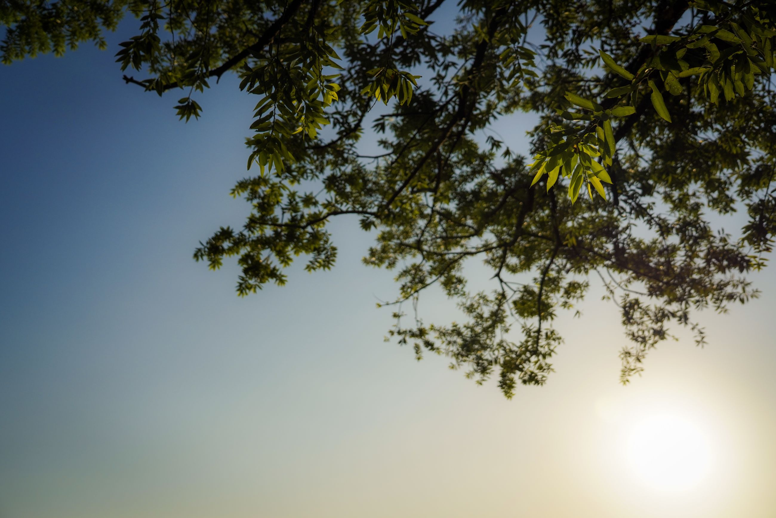 sky, tree, low angle view, plant, beauty in nature, tranquility, growth, nature, clear sky, branch, no people, sunlight, day, scenics - nature, tranquil scene, outdoors, sun, sunny, blue, leaf, high