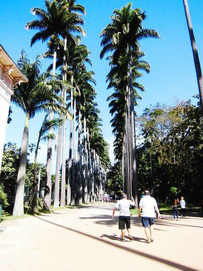 Jardimbotanicorj Rio De Janeiro Palmtrees Botanical Gardens Talltrees