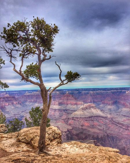 Grand Canyon EyeEm Gallery Eye4photography  EyeEm Team Grandcanyon Cloud - Sky Sky Beauty In Nature Tree Plant Nature Tranquility Land Scenics - Nature No People Landscape Outdoors