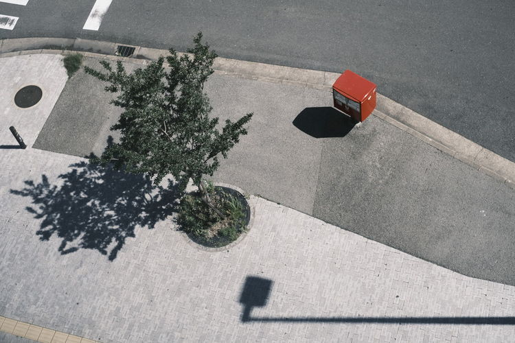 High angle view of plant on road