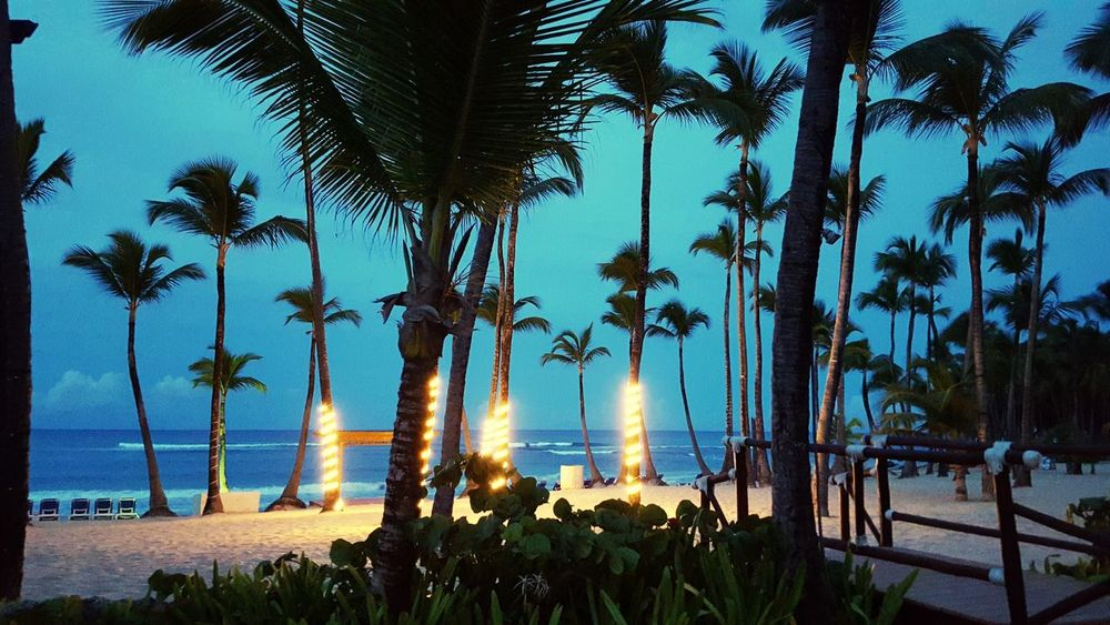 Dominican festivities Palm Tree Tranquil Scene Blue Tranquility Beauty In Nature Travel Destinations Beach Beach Party