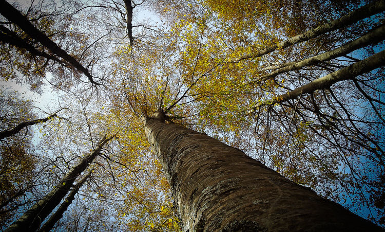 #EyeEmEsterlinda Autumn Backgrounds Beauty In Nature Bottom Day Nature Point Of View Sky Tree Tree Trunk Trees Up Wood WoodLand