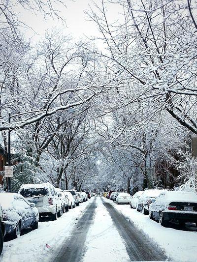 Snowstorm 2013 Winterwonderland Mothernature Herworkisgrand Chicagostreets Roscoevillage Blizzard 4daysodmadness Deepfreeze DeepFreeze #EyeEm #BestPic #OpenEdit #streetsofchitown