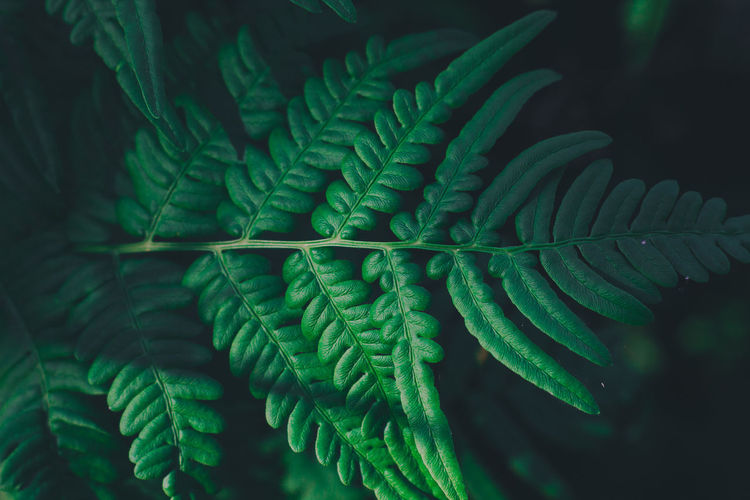 Travel Traveling Bali Bali, Indonesia Thailand Summer Nature Outdoors Green Color Growth Leaf Plant Part Plant Close-up Fern No People Beauty In Nature Selective Focus Day Natural Pattern Pattern Full Frame Focus On Foreground Freshness Tranquility Fragility Leaves