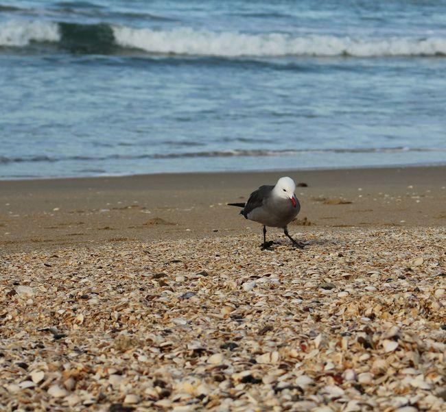 Animal Themes Animals In The Wild Beach Bird Sand Seagull Seashells, Sand And Water