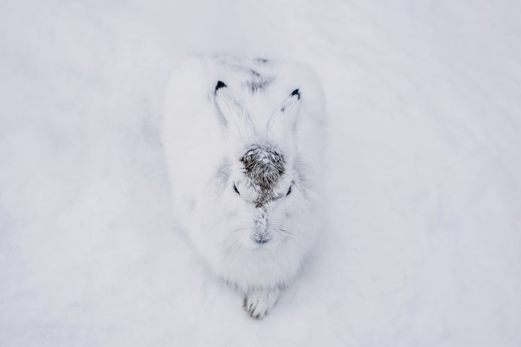 One Animal Animal Themes White Color No People Animal Mammal Vertebrate Furry Furry Friends Furry Friend Rabbit Hare Snowshoe Snowshoe Hare Snow Water Cold Temperature Cold Climate Wildlife Wild Animal