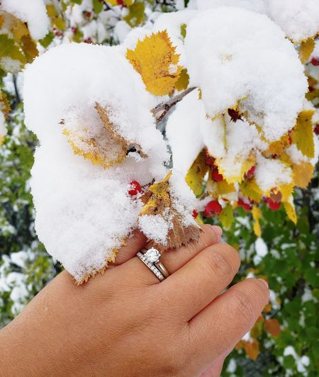 👰👨‍👩‍👧💍🍂🍁🍃🍀🌬🌨❄☃ Diamond Snowcapped Mountain Snow Autumn Diamond Ring ExploreEverything EyeEmNewHere Photography Beautiful Ilovephotography Enjoying The View Canada Photos Goodlife Snow ❄ Winter Mountains Enjoying Life Nature Explore Human Hand Flower Women Tree Love Close-up Blooming Fragility Single Flower Nail Polish Painting Fingernails