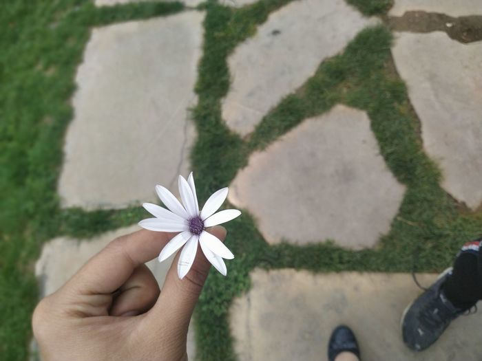 Low section of woman holding flower while standing on footpath
