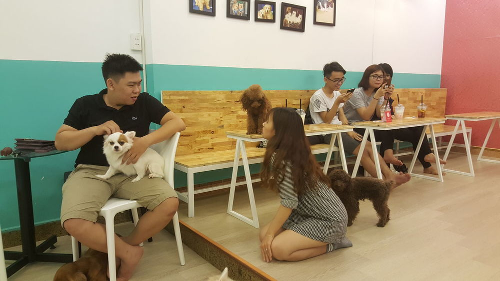 Ritdo pet spa/cafe/workspace in Da Nang, Vietnam. Indoors  Vietnam Danang Cafés Dogs Pets