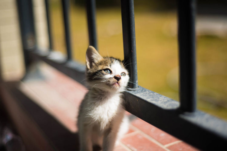 Portrait of kitten looking outdoors