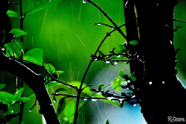 Green Color Nature Spider Web No People Close-up Leaf Outdoors Day Water Freshness Growth Fragility Animal Themes Beauty In Nature