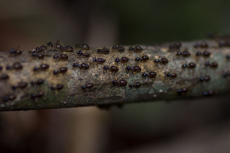 A Swarm of many ants marching a long a small branch. Ants Traveling Tree Animal Themes Animal Wildlife Animals In The Wild Ant Branch Close-up Colony Day Direction Directional Insect Marching Nature No People Outdoors Small Swarm Twig